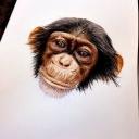 Tête de singe, toujours fait à l'accrylique