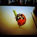 Coccinelle a la peinture accrylique