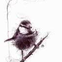 1er essai de dessin gribouillis d'oiseau