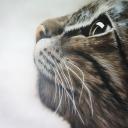 chat-réalisé-à-l'aérographe-par-karine