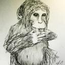 Petit singe.<br />Little Monkey.