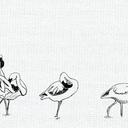 flamingos#1